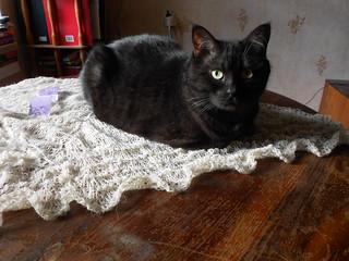 Holden кот на шали