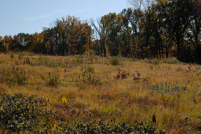 Shaw Nature Reserve (the Arboretum), in Gray Summit, Missouri, USA - prairie
