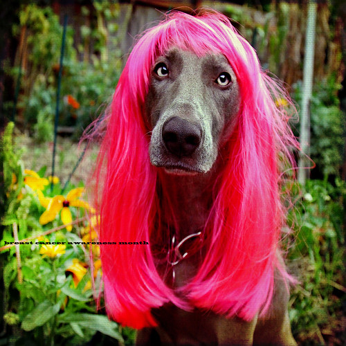 pink portrait sunlight color female square bokeh goose textures alterego weimaraner wig 7d shining breastcancer breastcancerawarenessmonth hypothetical vividimagination artdigital innamoramento awardtree magicunicornverybest crazygeniuses exoticimage 1crzqbn netartii redleatherdogcollarllll