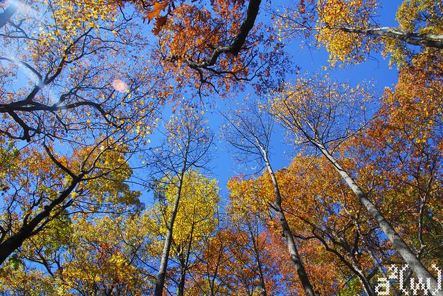Fall drive 2012-6