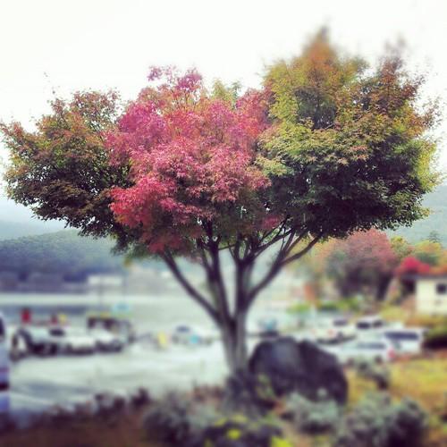 紅葉開始なう #tree #autumn