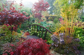 Misty morning in the autumn middle garden
