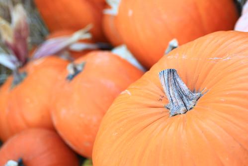 Halloween Pumpkin Patch 2012