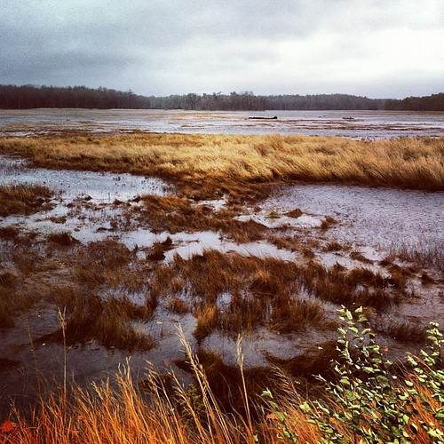 the local Rachel Carson refuge, flooded and buffeted by #sandy #maine