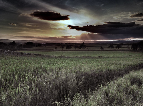 sunset field evening scotland corn dumfries