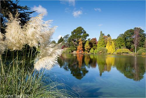 autumn lake colour reflection nationaltrust pampasgrass sheffieldpark