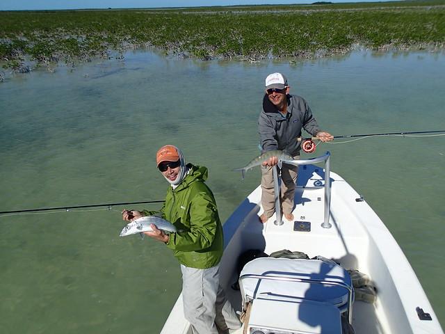 double bonefish in the marls