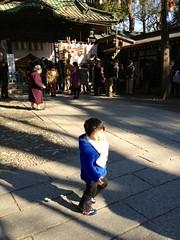 調神社とらちゃん 2013/1/13