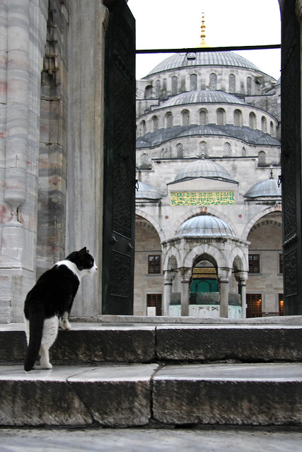 A cat and the Blue Mosque, Istanbul, Turkey イスタンブール、ブルーモスクとネコ