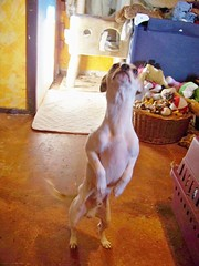 Beaker likes to stand