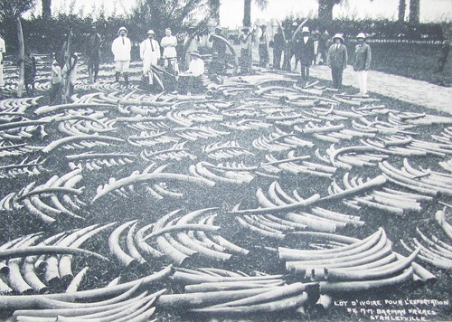 Colonial ivory for export_Kisangani