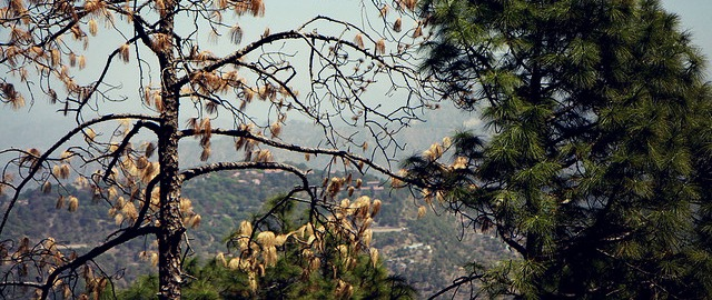 kasauli hotels