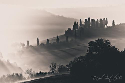 Cipressi by David Butali