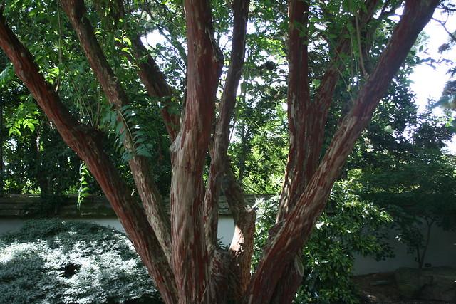 Multiple-trunked tree-ByChris_Alberti-CCBy2.0