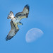 Osprey to the Moon