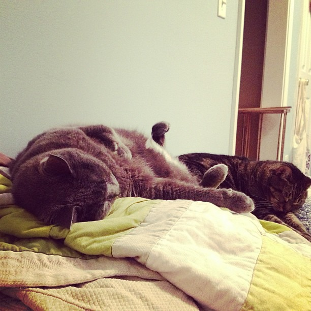 When you're feeling sad or lonely...look over at the cats. #snoringsoloud