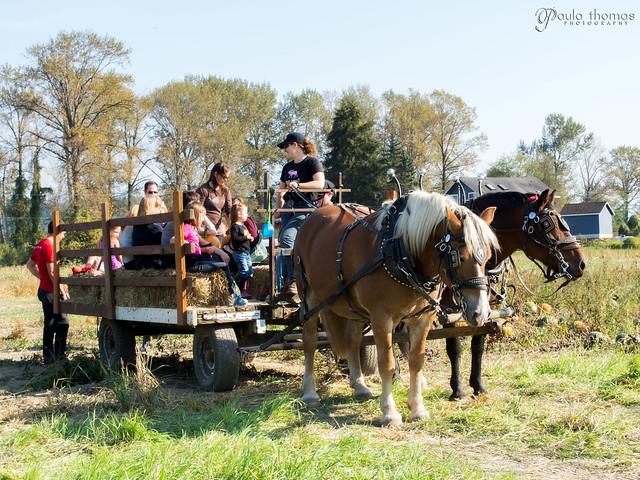 Horsey Hay Ride