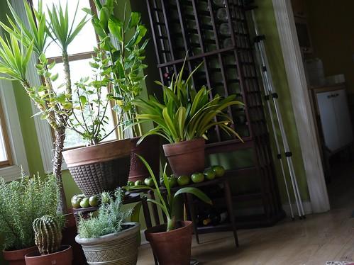 Transport roślin podczas przeprowadzki