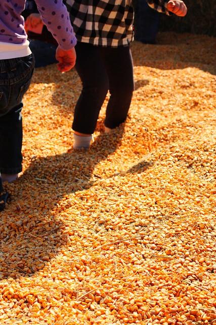 corn pool2