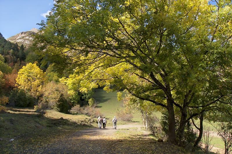 Paseo otoñal / Autumnal walk
