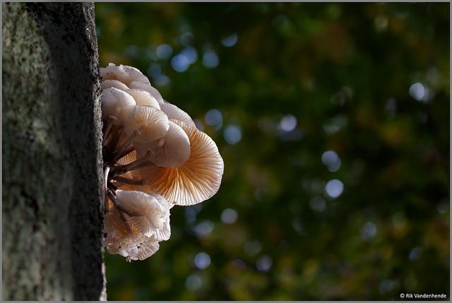 Hoog in een boomstam !