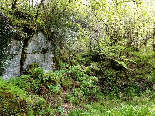 Woods surrounding Marble Arch Caves