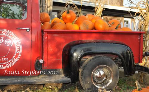 Pumpkins By the Truckful by Paula Stephens