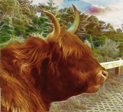 autumn sunset summer painterly animal digital rural photoshop sunrise canon painting ma photography photo farm capecod massachusetts country scenic newengland photograph cape longhorn cod sargent dap coldbrook fractalius taylorbrayfarm coldbrookstudio
