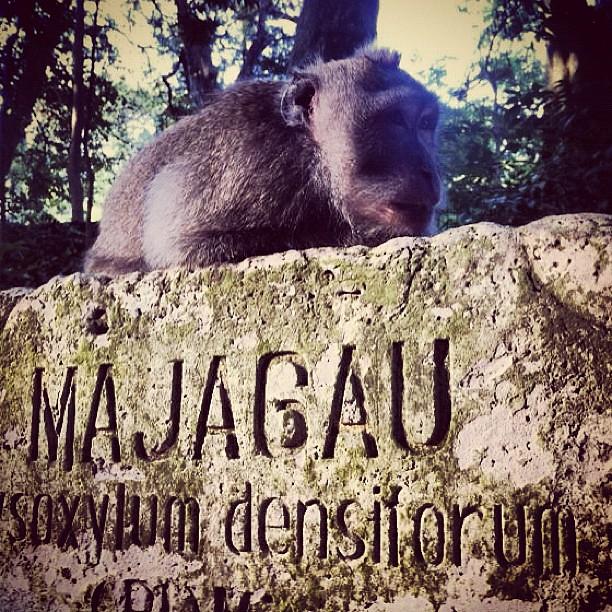#monkey #monkeyforest #Bali #Indonesia #instapet #instashot #instapic #instagood