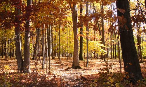 autumn orange newyork tree fall leaves yellow rochester