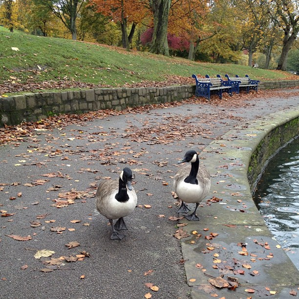 This #pair of #ducks came wanting food but unfortunately I forgot to take some bread with me.