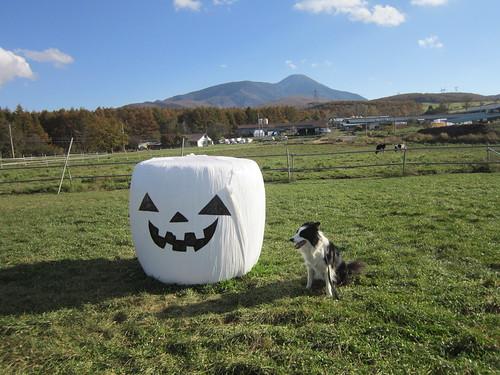 ランディ~長門牧場で  2012.10.25 by Poran111