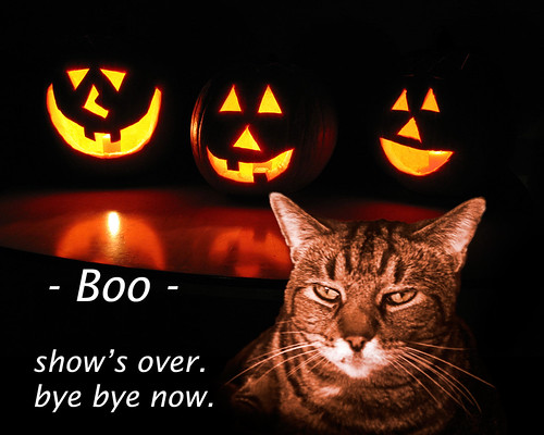 orange holiday halloween cat lol humor kitty