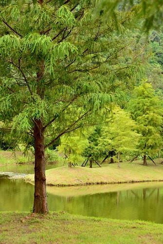 travel taiwan 台灣 風景 旅遊 花蓮 hualiang 葛莉絲莊園 gracegarden