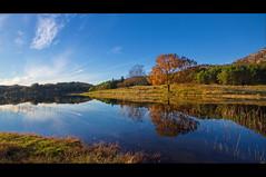Tree Reflecting....