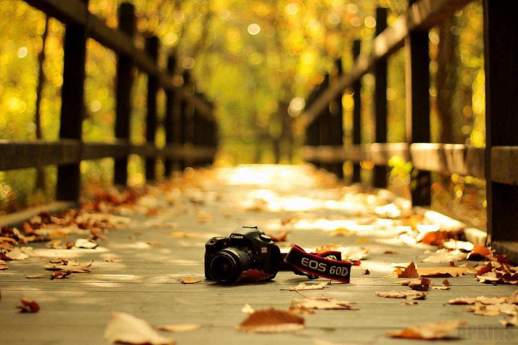 Yoeido Autumn Shoot 2012