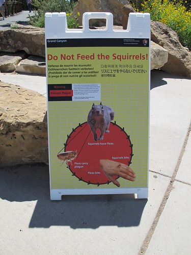 Don't Feed the Squirrels!