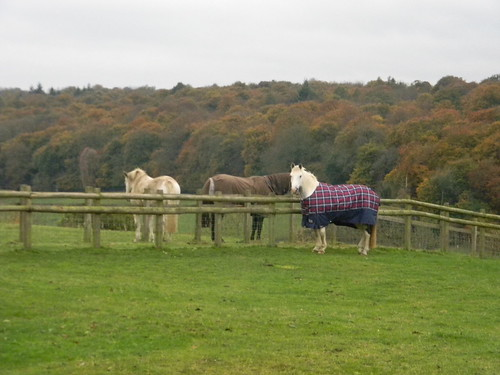 Horses with coats on