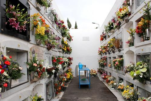 Día de finados. 2012. Flores 26
