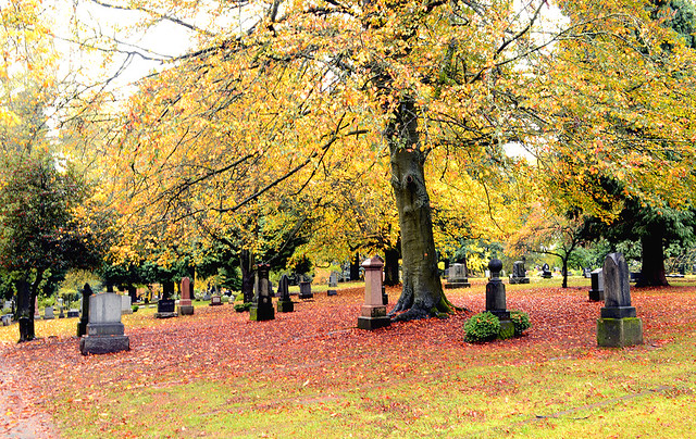 Beautiful Lone Fir Cemetery