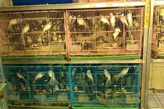 擁擠的籠舍常出現在知名的鳥街。(圖片來源:台灣防止虐待動物協會)