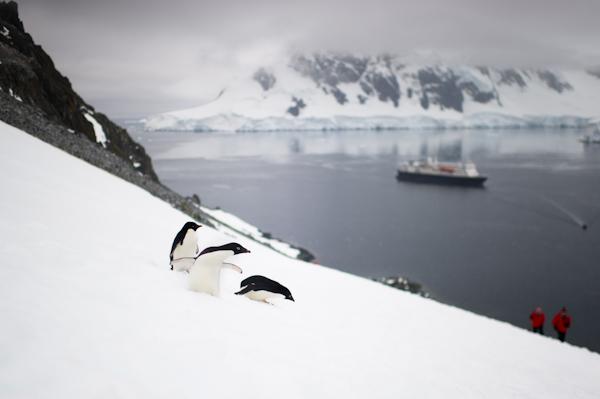 RYALE_Antarctica_Penguins-26