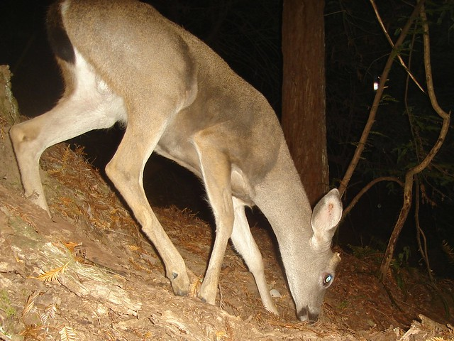 Image Result For Can Antlers Cause