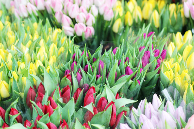 Tulips on Columbia Road