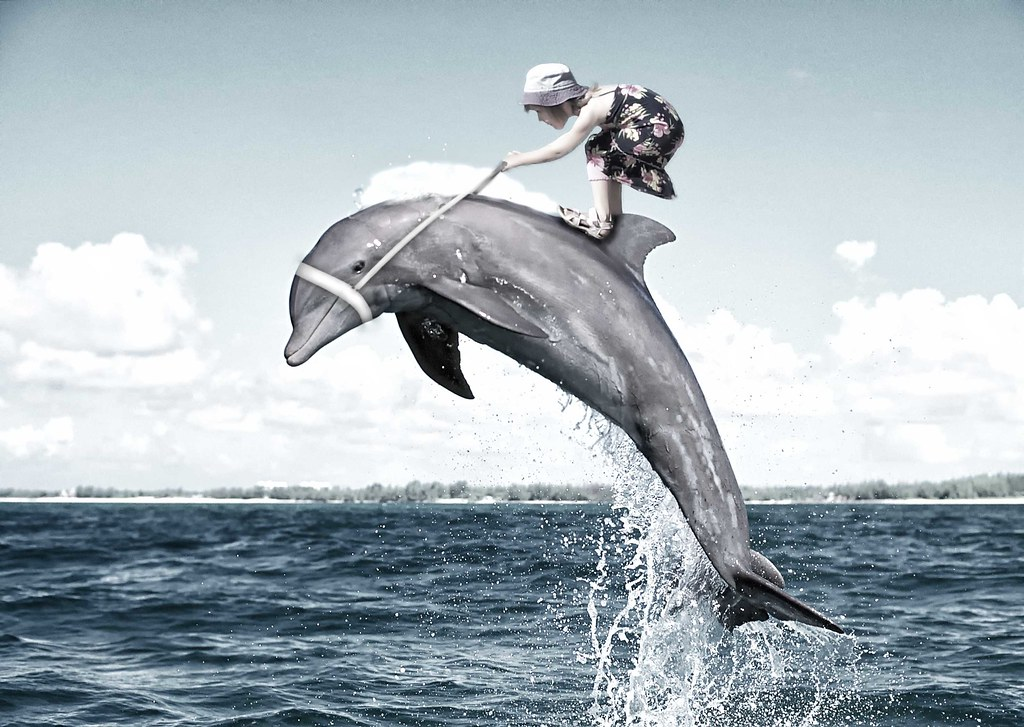 Riding the Dolphin