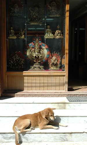 Brown dog sleeping on the steps of thousand armed chenrezig statue store, Boudha, Kathmandu, Nepal by Wonderlane