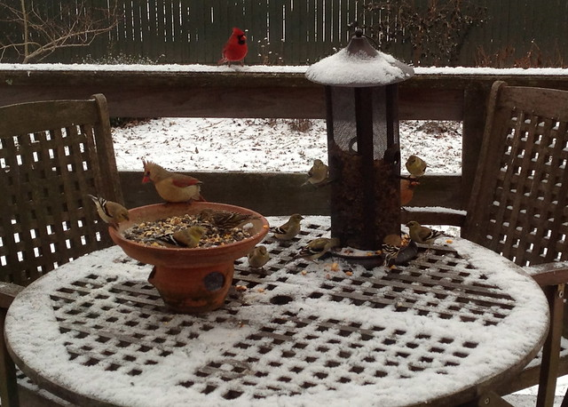 birdie buffet