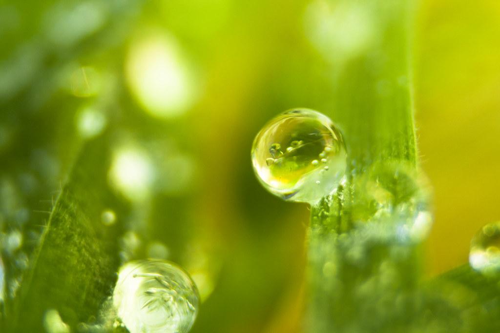 葉っぱの水滴画像