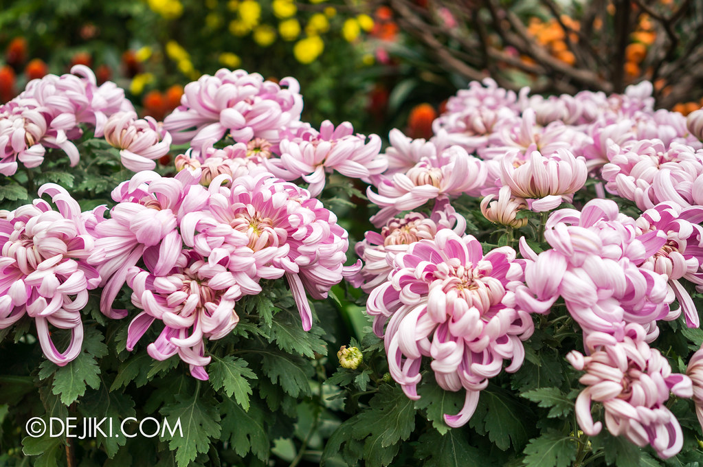 Gardens by the Bay - Chrysanthemum