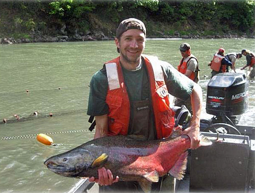 Service fisheries biologist Jeff Jolley with a returning White Salmon River fall Chinook Salmon. Removal of the 100-year-old Condit Dam opened new spawning and rearing grounds for salmon and to steelhead. (US Fish and Wildlife Service photo).